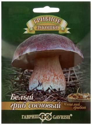 Мицелий грибов Гриб Белый Сосновый на зерновом субстрате, 15 мл Гавриш