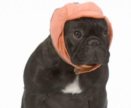 Шапка для собак ТУЗИК размер унисекс, оранжевый, длина спины см