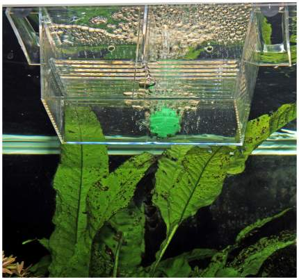 Отсадник для рыб JBL BabyHome JBL6431500