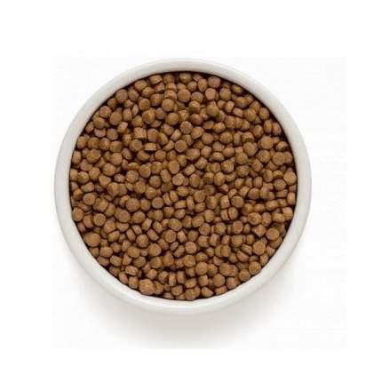 Сухой корм для кошек ONE&ONLY Adult Sterilized, для стерилизованных, утка и рис, 2кг