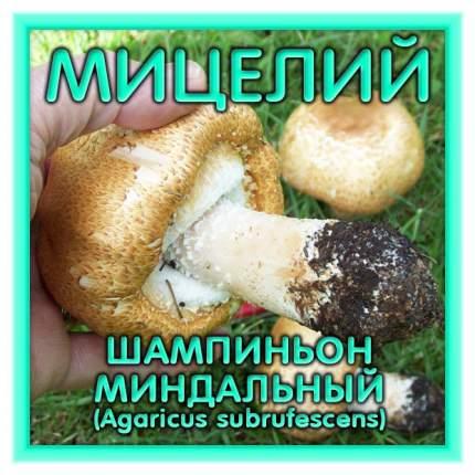 Мицелий грибов Зерновой Шампиньон Миндальный, 150 мл Симбиоз