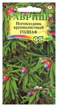 Семена Ногоплодник (подокарпус) крупнолистный Голиаф, 3 шт, Гавриш