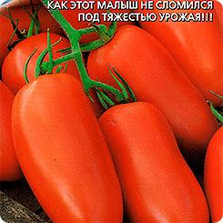 Семена Томат Чудо лентяя, 0,1 г, Уральский дачник