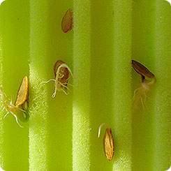 Матрасик для проращивания семян Лабиринт 22х28 см, 2 шт