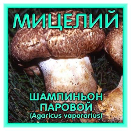 Мицелий грибов Зерновой Шампиньон Паровой, 150 мл Симбиоз