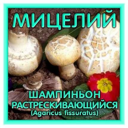 Мицелий грибов Зерновой Шампиньон Растрескивающийся, 150 мл Симбиоз