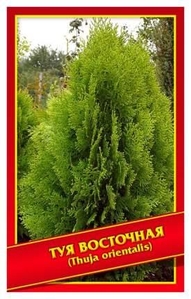 Семена Туя Восточная, 0,3 г Симбиоз