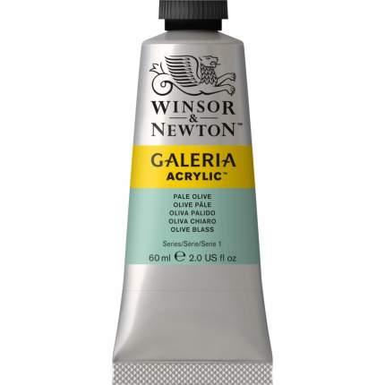 Акриловая краска Winsor&Newton Galeria бледно-оливковый 60 мл