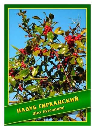 Семена Падуб Гирканский, 0,1 г Симбиоз