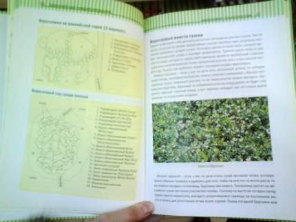 Книга Вересковый сад в ландшафтном дизайне