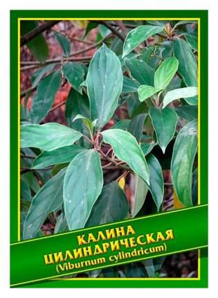 Семена Калина Цилиндрическая, 0,5 г Симбиоз