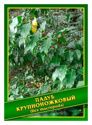 Семена Падуб Крупноножковый, 0,5 г Симбиоз