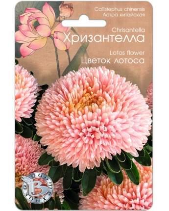 Семена Астра китайская Хризантелла Цветок Лотоса, 40 шт, Биотехника