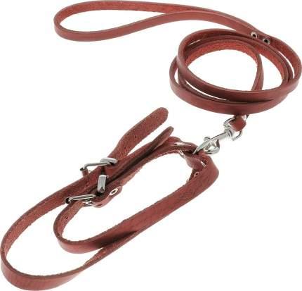 Комплект поводок и шлейка Аркон, цвет красный, для кошек и собак, ширина 8мм