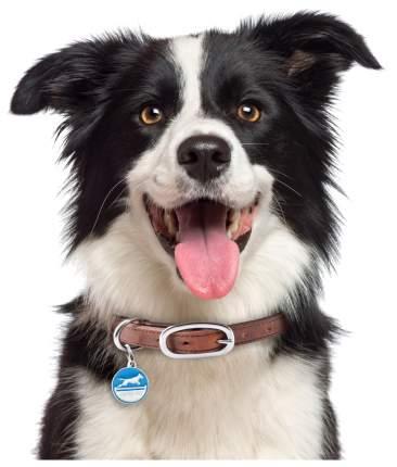 Адресник для собак My Family Charms Аджилити для животных (Голубой)