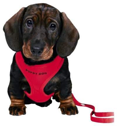 Шлейка для щенков Trixie, красный