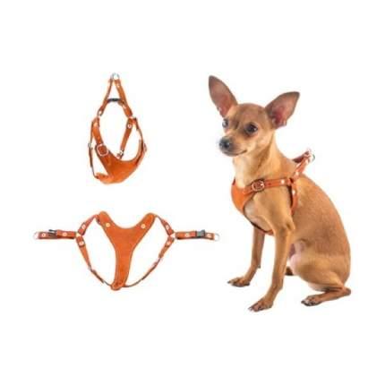 Шлейка для собак Дарэлл Ева, быстросъемная, замша, рыжая, XS, шея 19-27см, грудь 24-32см