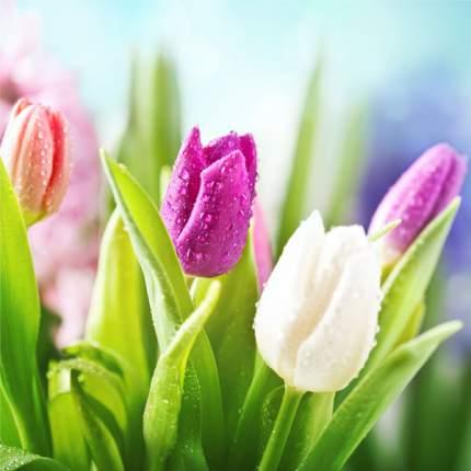 Картина на холсте 30x30 Весенние тюльпаны Ekoramka HE-101-458