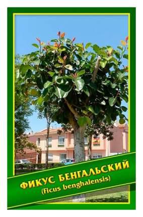 Семена Фикус Бенгальский, 0,1 г Симбиоз