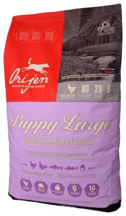 Сухой корм для щенков Orijen Puppy Large, индейка, рыба, 11.4кг