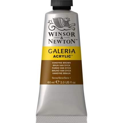 Акриловая краска Winsor&Newton Galeria коричневый ван дейк 60 мл