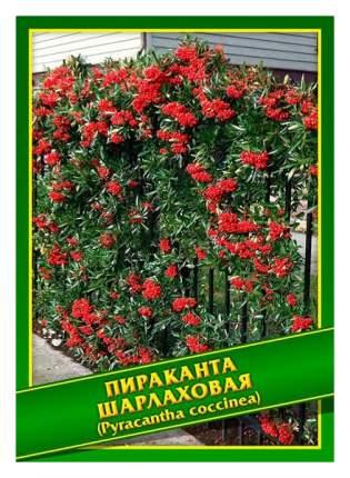 Семена Пираканта Шарлаховая, 0,1 г Симбиоз