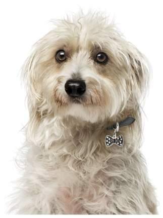 Адресник для кошек и собак My Family Charms Бантик (3 см, Черный)