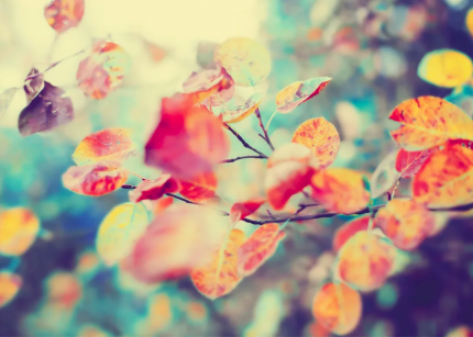 Постер Осенние листья 60х90 в тубусе