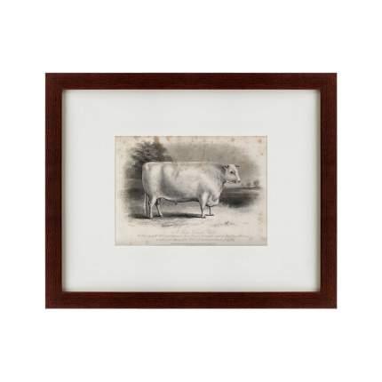 Литография A short horned bull, 1849, 42х52см, Картины в Квартиру