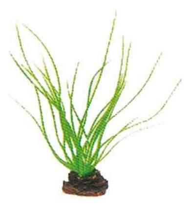 Laguna Растение Акорус, 13 см