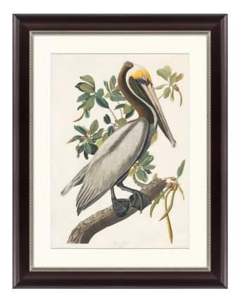 Картина Картины в Квартиру Американский бурый пеликан 47 х 60 см