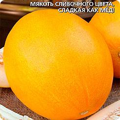 Семена Дыня Сливочная Карамель, 12 шт, Уральский дачник