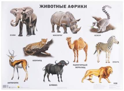 Плакат проф-Пресс Животные Африки
