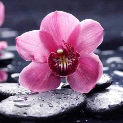 Набор алмазной вышивки Яркие Грани Орхидея, размер 20х20см, 32 цвета