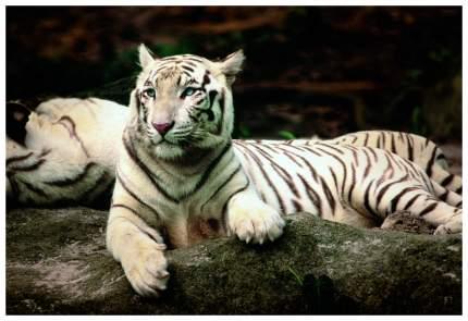 Пазл Trefl Бенгальские тигры 26075