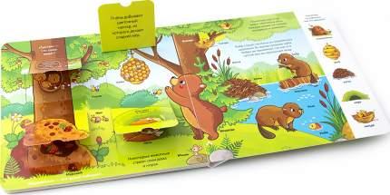 Книжка с окошками. Лес
