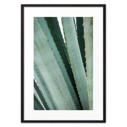 Постер в рамке Листья алое 40х60 см