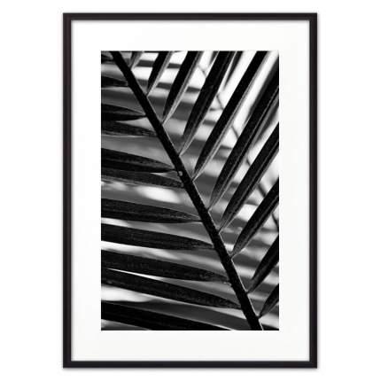 Постер в рамке Лист пальмы 21х30 см