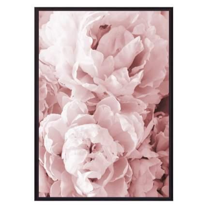 Постер в рамке Розовые пионы 50х70 см