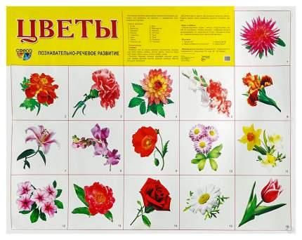 Демонстрационный плакат Цветы Садовые 26893