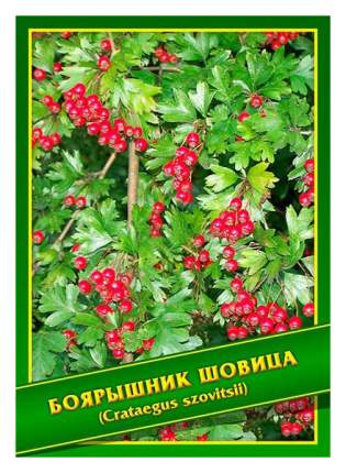 Семена Боярышник Шовица, 1 г Симбиоз