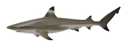 Фигурка collecta рифовая акула (m)
