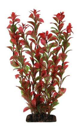 Laguna Растение Людвигия красная, 10 см
