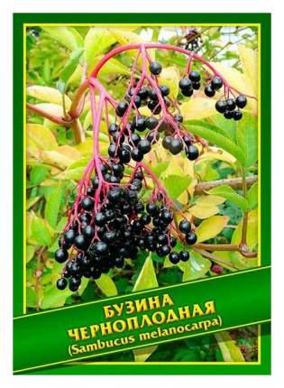 Семена Бузина Черноплодная, 0,1 г Симбиоз