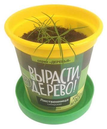 Набор для выращивания Вырасти, дерево! zk-049 Лиственница сибирская