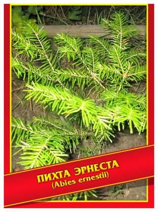 Семена Пихта Эрнеста, 3 шт, Симбиоз