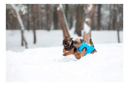 Куртка для собак AiryVest размер S унисекс, черный, голубой, длина спины 40 см