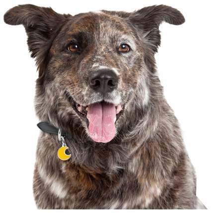 Адресник для собак My Family Charms Полумесяц (2 х 2 см)