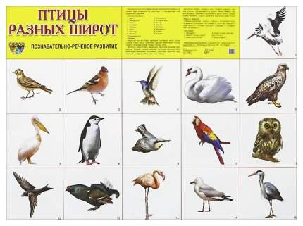 Демонстрационный плакат Сфера тц птицы Разных Широт 26878