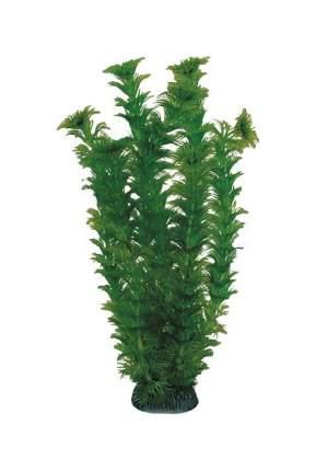 Растение Hagen Laguna Амбулия Зеленая для аквариума (200 мм)
